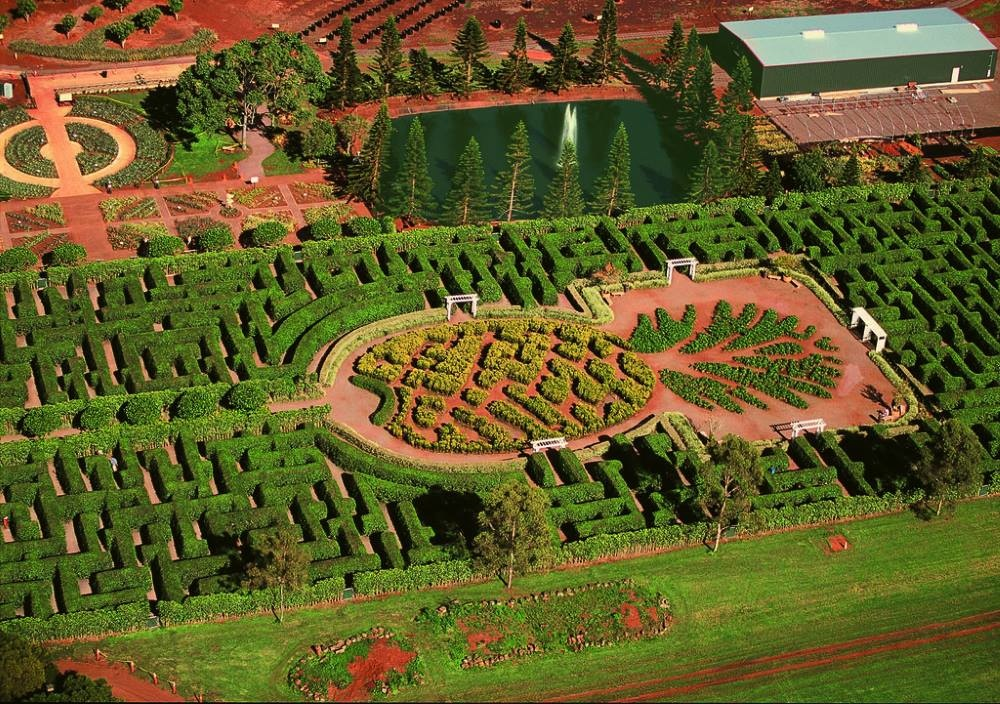 Фото: Dole Plantation Pineapple Maze
